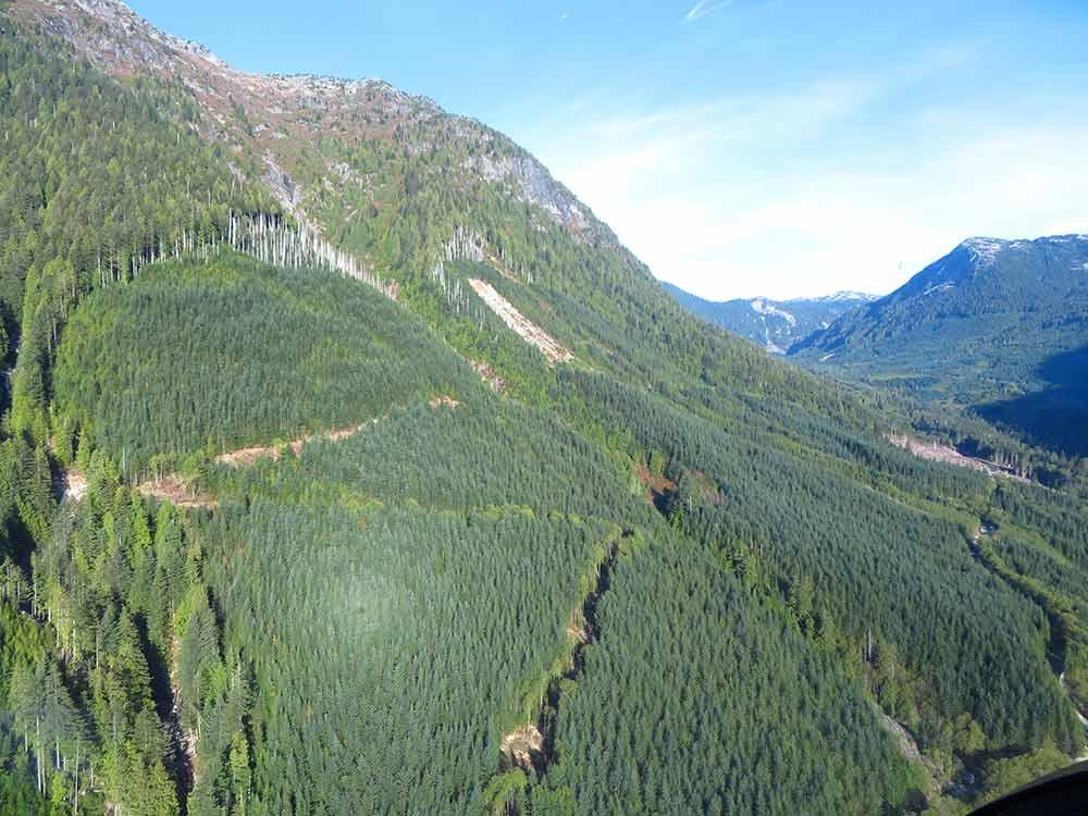 potlatch project forest slope
